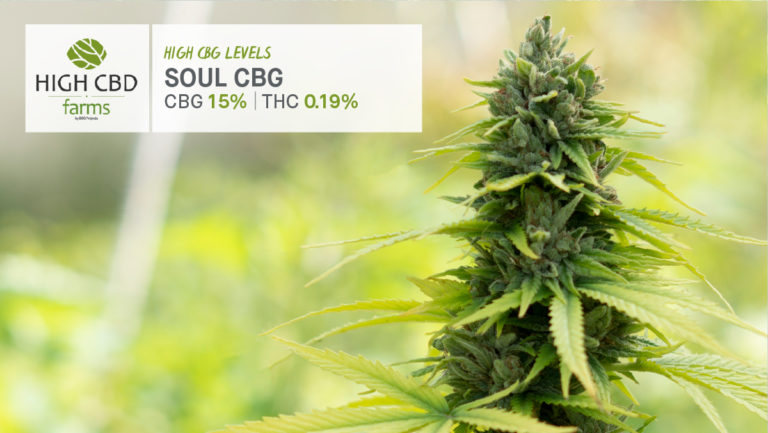 Soul CBG Strain - Product Image